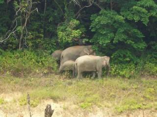 belum-dschungel-elefanten