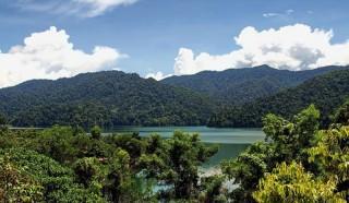 See im Belum Rainforest