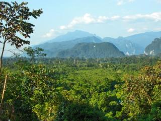 Blick auf den Dschungel im Mulu Nationalpark