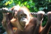 Orang Utans & Entspannung – Borneo in 2 Wochen