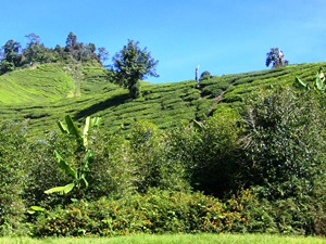 Aussicht Cameron Highlands