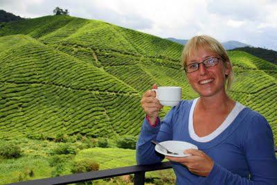 Die Cameron Highlands ein Teil von Malaysia Hightlights