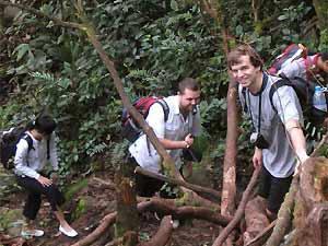 Wandern durch den Mossy Forest