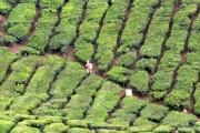 Unbekannter Regenwald & Inselhopping – mit dem Mietwagen unterwegs