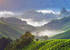 Blick über die Camaeron Highlands auf Ihrer Malaysia Borneo Rundreise