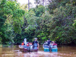 Flusssafari am Kinabatangan Fluss