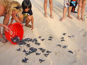 Schildkröten ins Meer entlassen