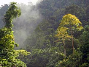 malaysia-dschungel-nebel