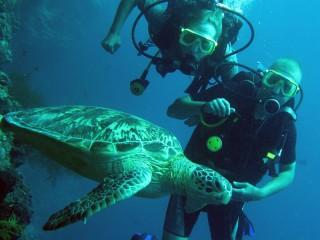 Erkunden Sie die traumhafte Unterwasserwelt beim Tauchen vor Lankayan