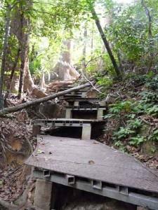 Wanderung über Stock und Stein im Dschungel
