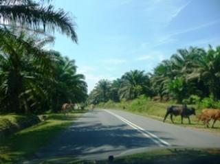 Straßen von Malaysia