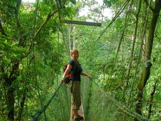 Canopy Walk in Mulu