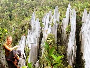 Reiseberichte Borneo zur Pinnacles Besteigung im Mulu Nationalpark