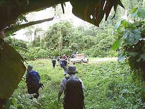 Dschungelwanderung durch den Mulu Nationalpark