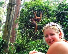 Besuchen Sie in Sepilok die Borneo Orang Utan Sanctuary in der Nähe von Sandakan
