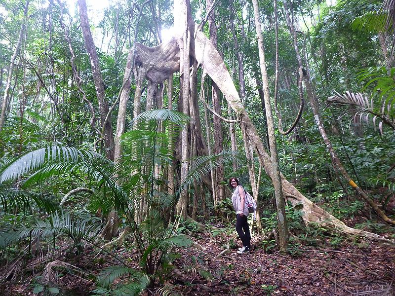 Dschungelausflug in Sarawak