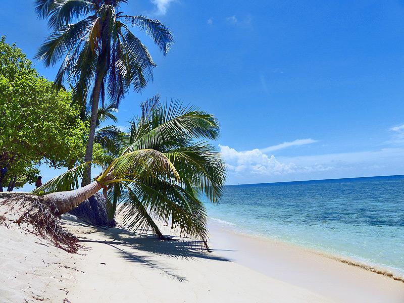 Tropischer Sandstrand auf Turtel Island