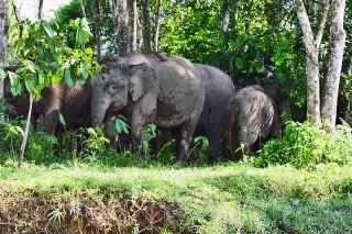 Elefanten am Flussufer
