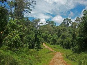 Schotterpiste im Tabin Dschungel