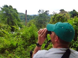 Ausblick über den Dschungel