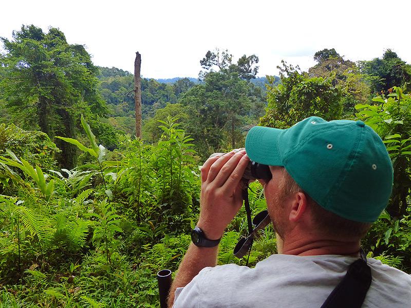 Wanderung durch den Borneo Regenwald