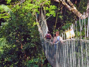 Canopy Walk im Taman Negara Nationalpark