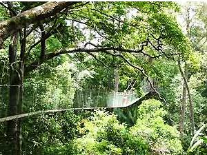 Canopy Walk im Taman Negara
