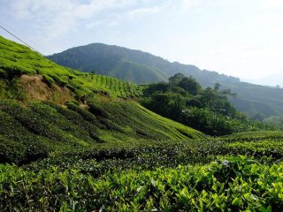 Aussicht in den Cameron Highlands - Malaysia Highlights