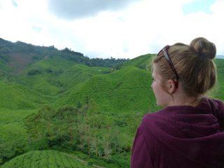 Blick auf die grünen Teeplantagen in den Cameron Highlands
