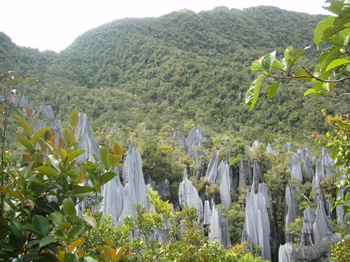 Trekking Tour zu den Pinnacles im Mulu Nationalpark
