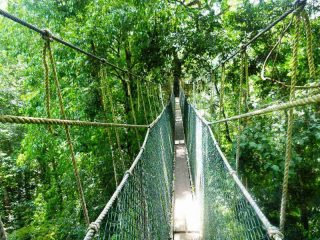 Canopy Walk im Taman Negara - Malaysia Highlights