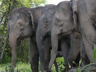 Wilde Elefanten im Tabin Nationalpark