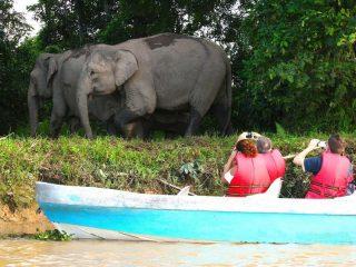 Dschungelbootsfahrt in Sukau