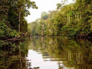 Kinabatangan Fluss bei Sukau