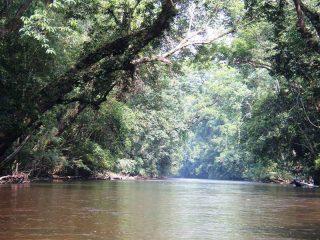 Dschungel im Taman Negara Nationalpark