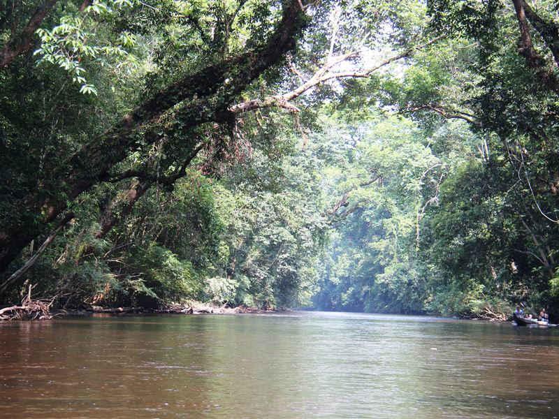 Während Ihrer Malaysia Rundreise und Baden besuchen Sie den Taman Negara Nationalpark