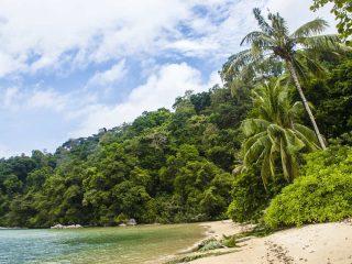 Dichter Dschungel auf Pulau Tioman