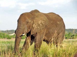 Chobe Nationalpark Botswana Safari Elefanten