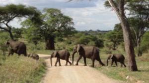 Elefanten im Etosha Nationalpark in Namibia