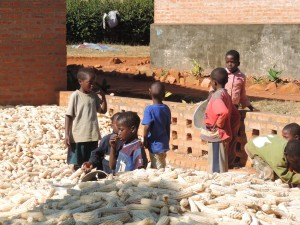 Kinder in einem Berg von Maiskolben helfen bei Verarbeitung