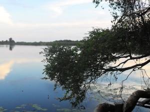 Botswana - das Okavango Delta - Ausblick auf das Wasser - Rundreise Namibia Botswana