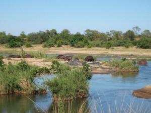 Botswana - Nilpferde am Wasserloch im Chobe Nationalpark - Rundreise Namibia, Botswana und Victoria Falls