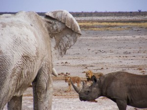 Elefant, Nashorn und Löwe am Wasserloch im Etosha