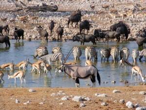 Namibia - Tiere am Wasserloch im Etosha Nationalpark in Namibias Norden