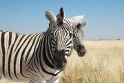 Go Namibia