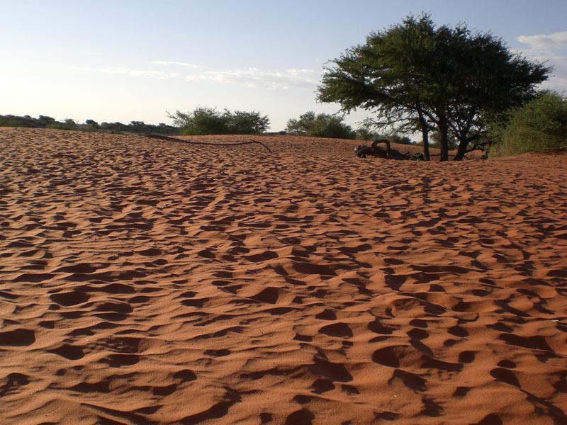 Kalahari Wüste Namibia Wandern Rundreise