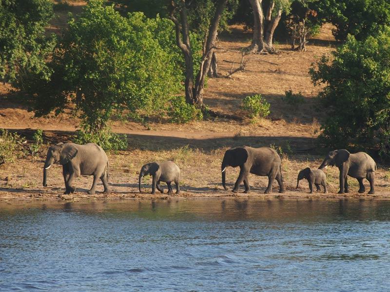 Botswana - Chobe Nationalpark - von Windhoek zu den Victoria Fällen