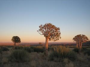 Köcherbäume bei Keetmanshop - Namibia Rundreise Selbstfahrer