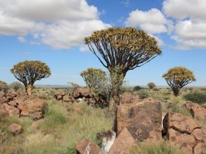 Namibia - Köcherbaumwald bei Keetmanshoop - Highlights Namibia