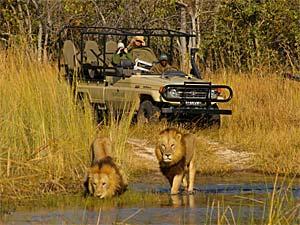 Botswana - Moremi Nationalpark - Safarigruppe im Jeep beobachtet Löwen am Wasserloch - Rundreise Namibia, Botswana und Victoria Falls